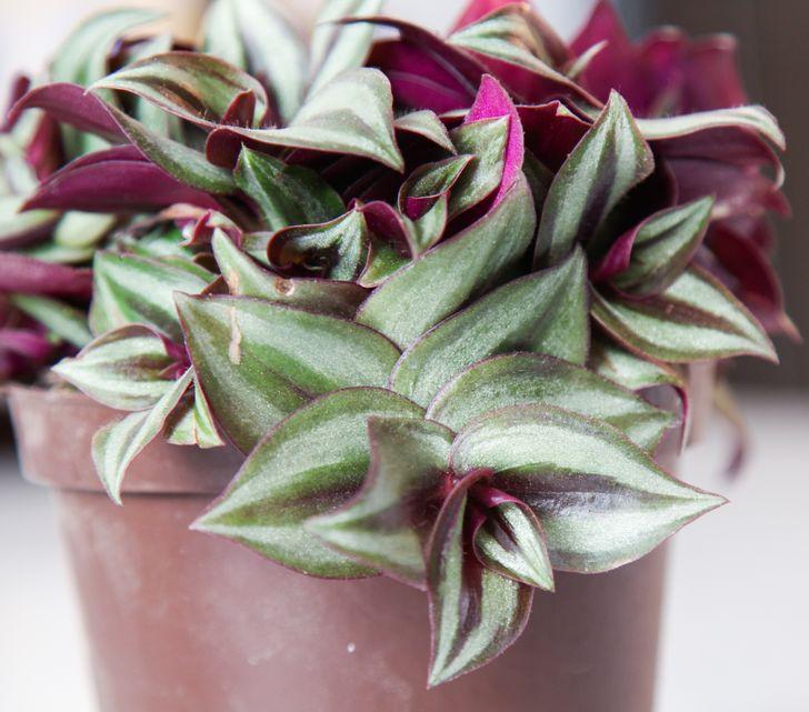 Điểm danh các loại cây ít cần chăm sóc mang lại màu sắc cùng sức sống cho ngôi nhà của bạn - Ảnh 7.