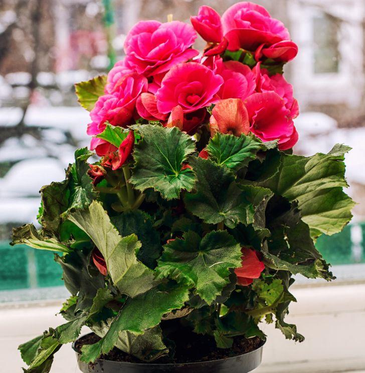 Điểm danh các loại cây ít cần chăm sóc mang lại màu sắc cùng sức sống cho ngôi nhà của bạn - Ảnh 8.