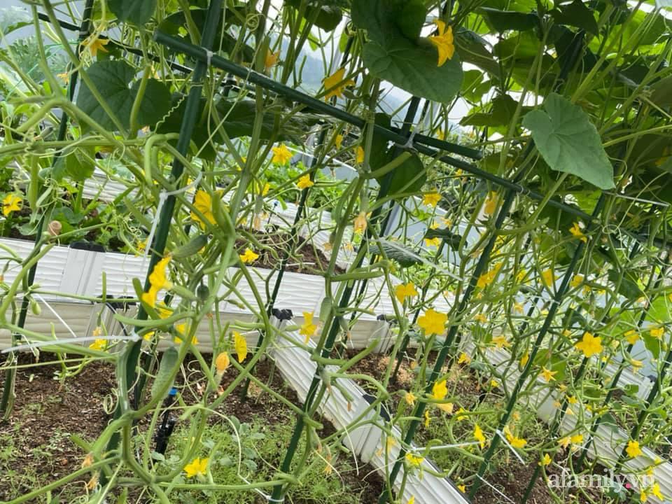 Sân thượng quanh năm bội thu rau trái nhờ bàn tay đảm đang của người mẹ trẻ ở Lào Cai - Ảnh 4.