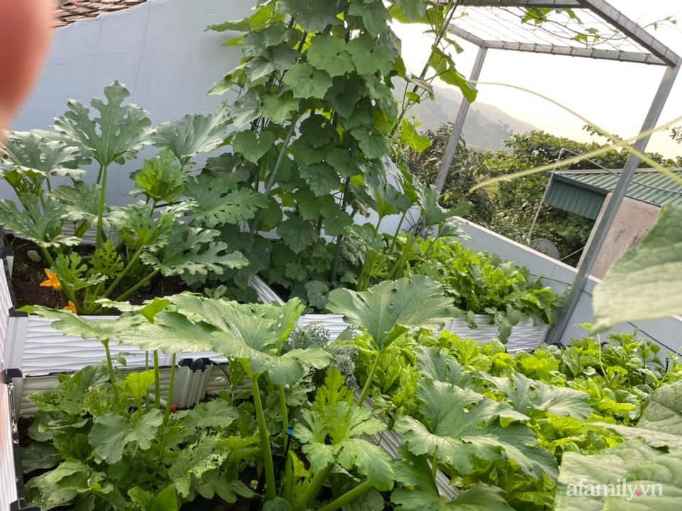 Sân thượng quanh năm bội thu rau trái nhờ bàn tay đảm đang của người mẹ trẻ ở Lào Cai - Ảnh 1.