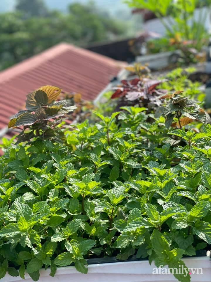 Sân thượng quanh năm bội thu rau trái nhờ bàn tay đảm đang của người mẹ trẻ ở Lào Cai - Ảnh 21.
