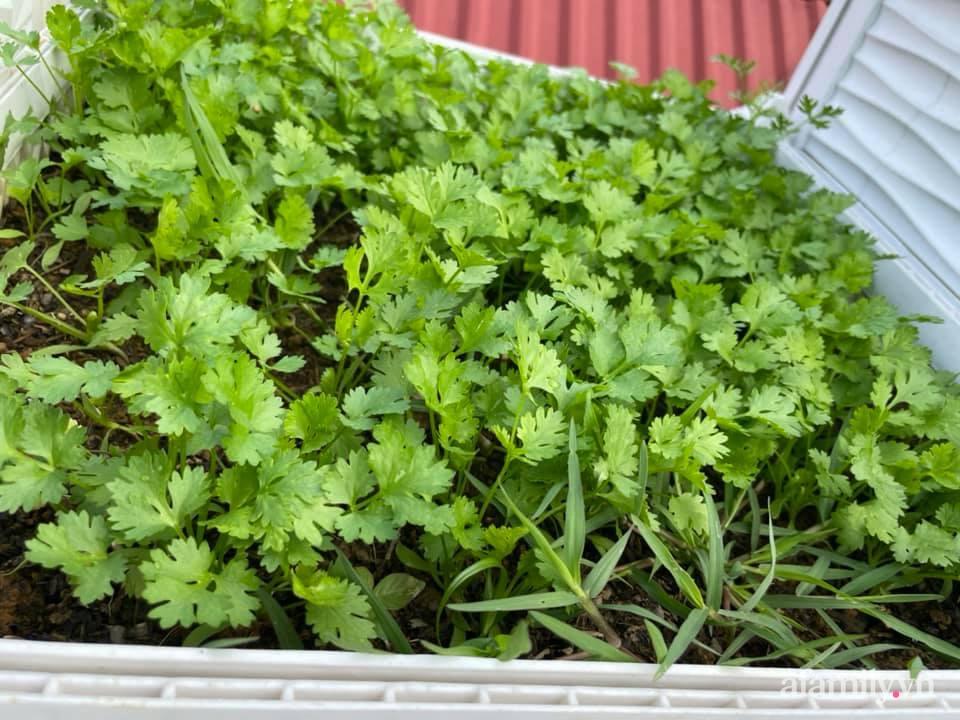 Sân thượng quanh năm bội thu rau trái nhờ bàn tay đảm đang của người mẹ trẻ ở Lào Cai - Ảnh 18.