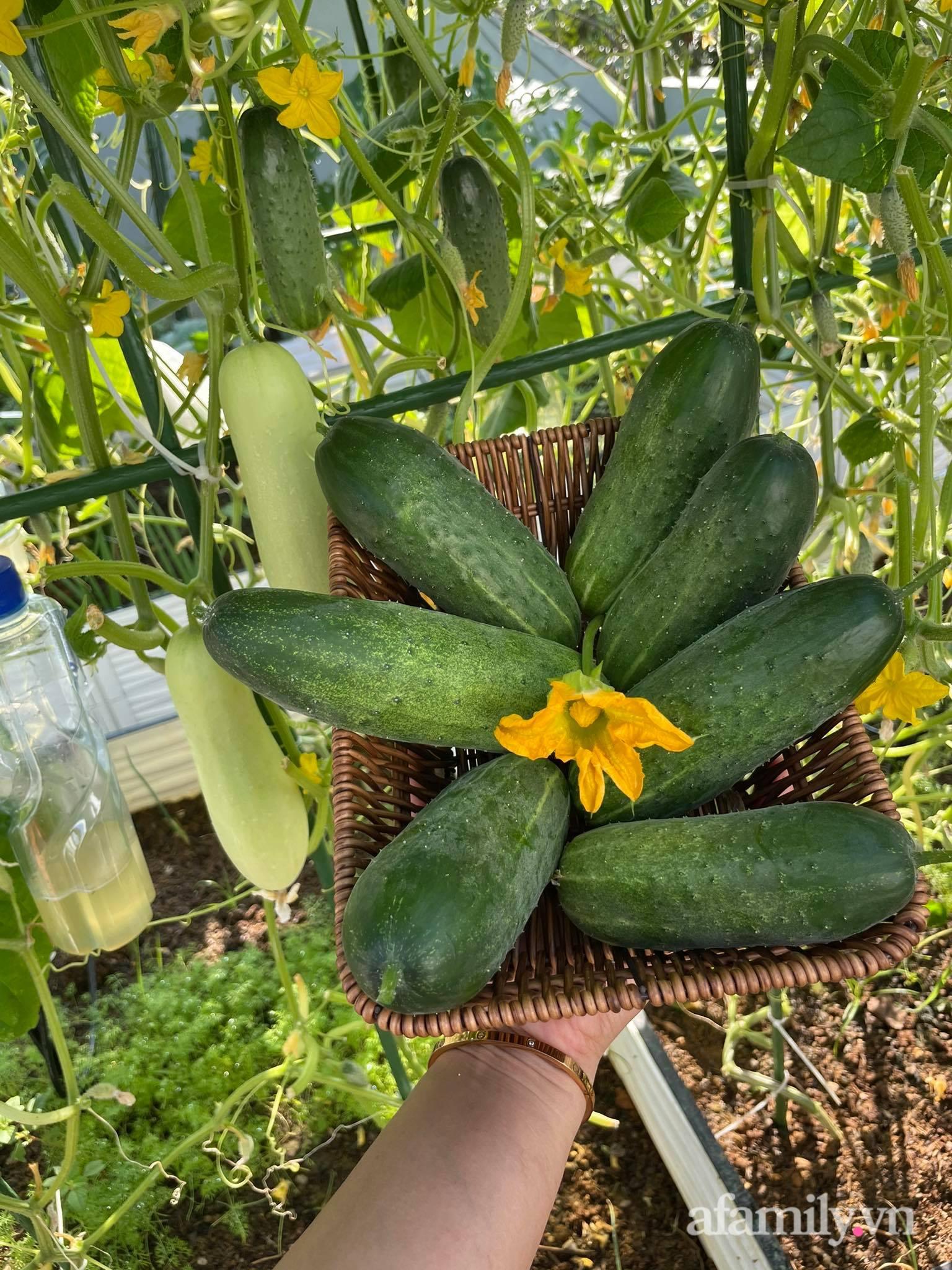 Sân thượng quanh năm bội thu rau trái nhờ bàn tay đảm đang của người mẹ trẻ ở Lào Cai - Ảnh 7.