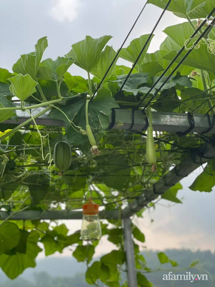 Sân thượng quanh năm bội thu rau trái nhờ bàn tay đảm đang của người mẹ trẻ ở Lào Cai - Ảnh 14.