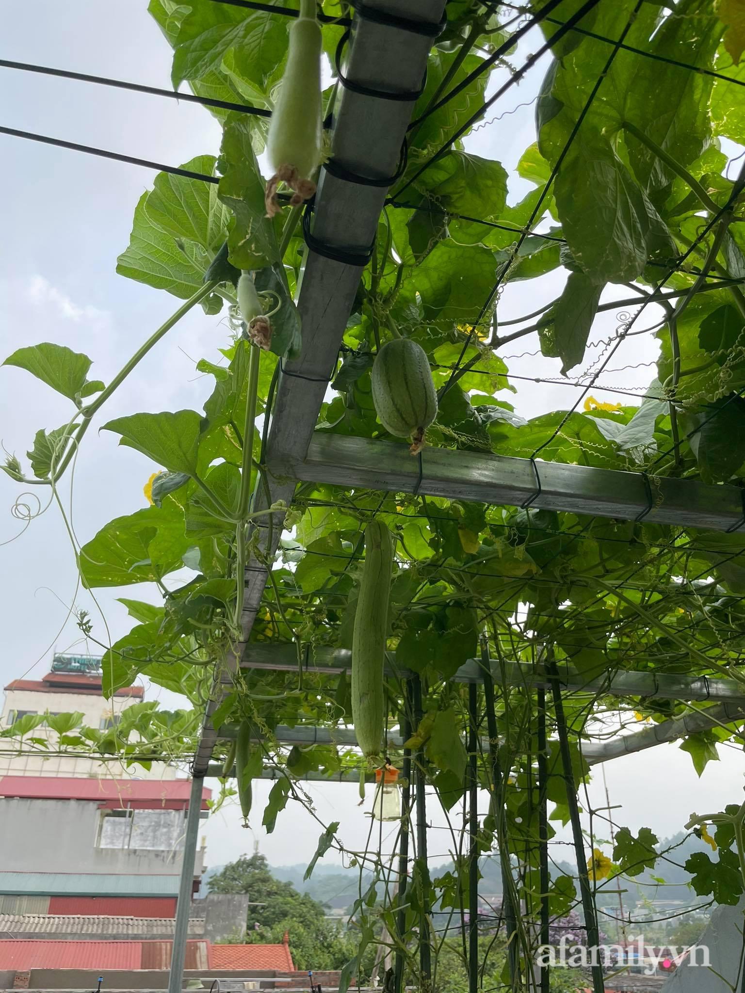 Sân thượng quanh năm bội thu rau trái nhờ bàn tay đảm đang của người mẹ trẻ ở Lào Cai - Ảnh 6.