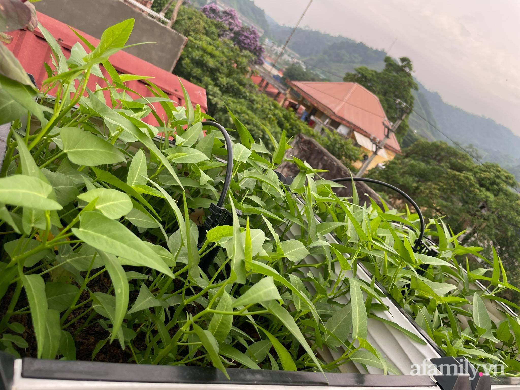 Sân thượng quanh năm bội thu rau trái nhờ bàn tay đảm đang của người mẹ trẻ ở Lào Cai - Ảnh 3.