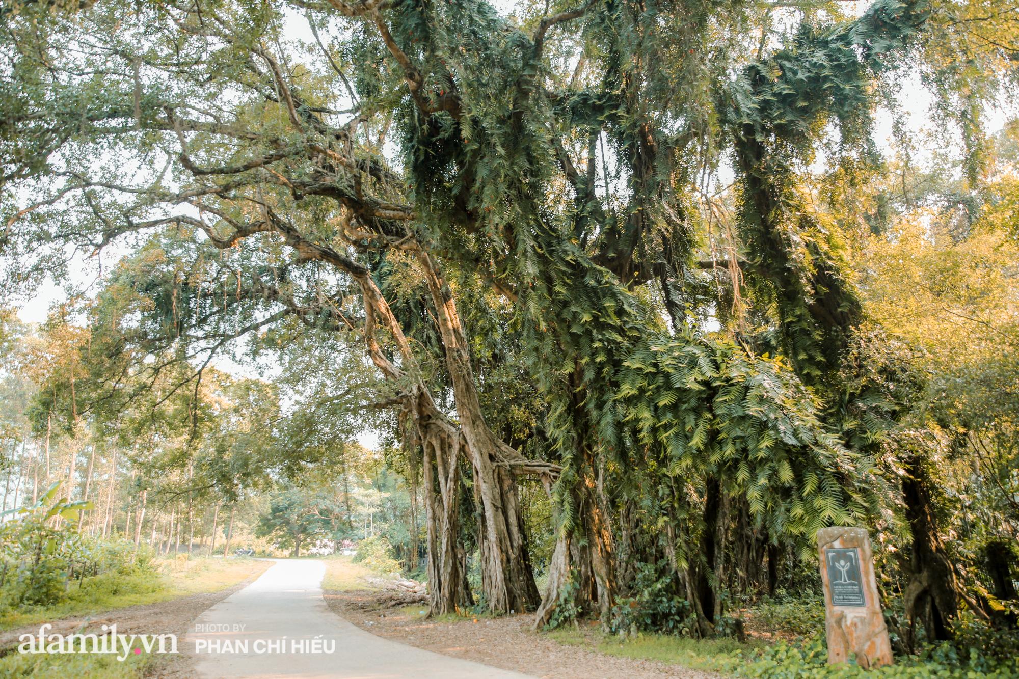 Ngôi làng độc nhất Việt Nam sở hữu chiếc cổng từ cây đại thu 800 năm tuổi, từng là bối cảnh cực ấn tượng trong những bộ phim về làng quê Việt Nam - Ảnh 3.