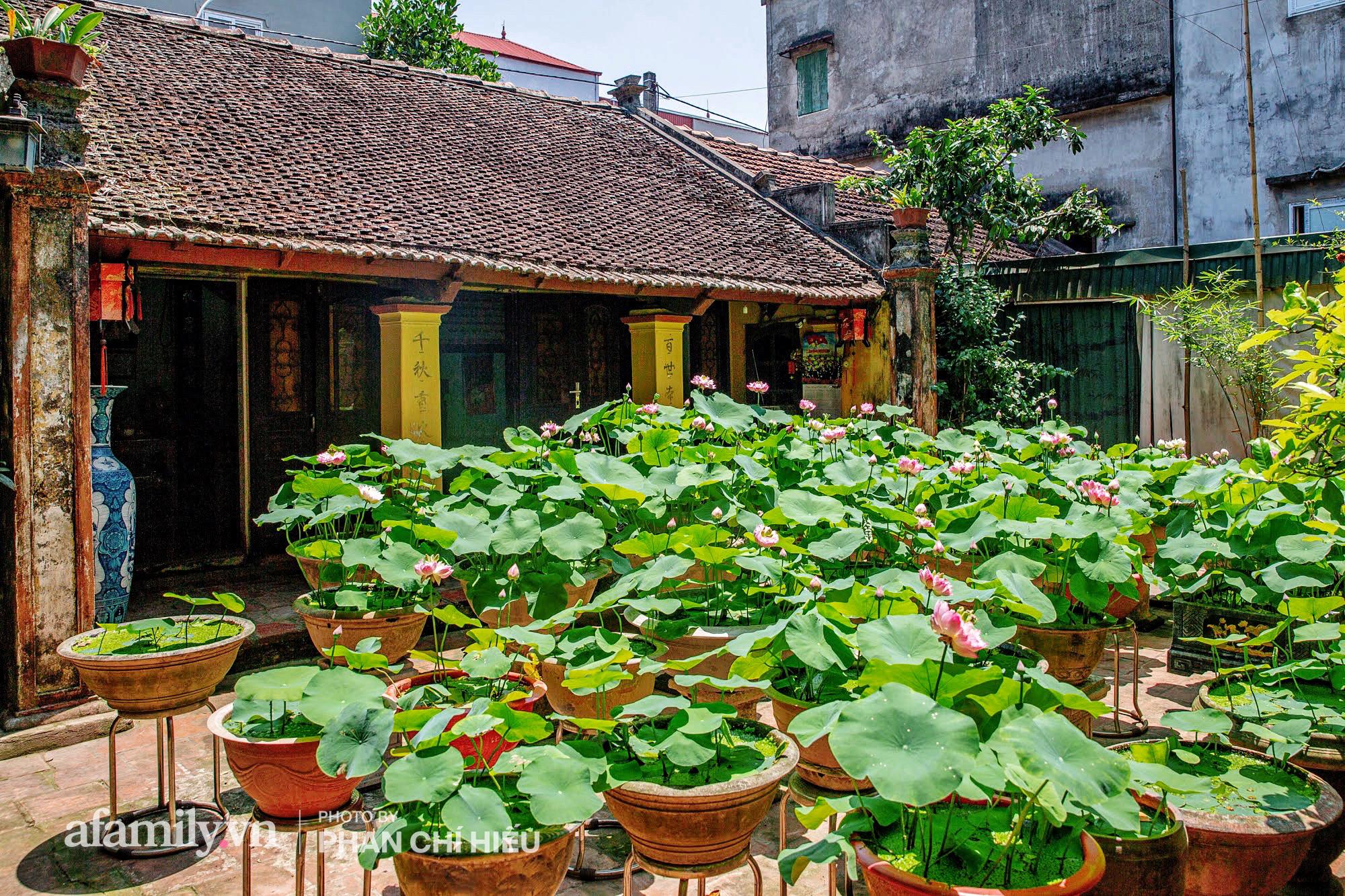Độc đáo với thú chơi sen cung đình Huế tại Hà Nội, nở hoa tuyệt đẹp giữa ngôi nhà cổ trăm năm tuổi khiến bao người mê mẩn - Ảnh 14.