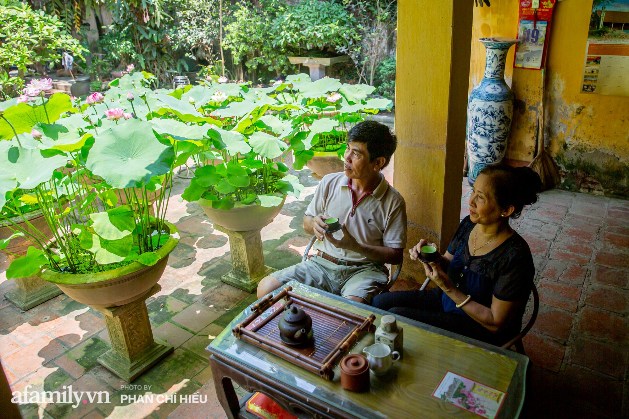 Đôi vợ chồng sở hữu căn nhà cổ 100 năm tuổi tại Hà Nội sưu tập và trồng hàng trăm gốc sen cung đình Huế quanh nhà khiến ai đi qua cũng phải trầm trồ - Ảnh 13.