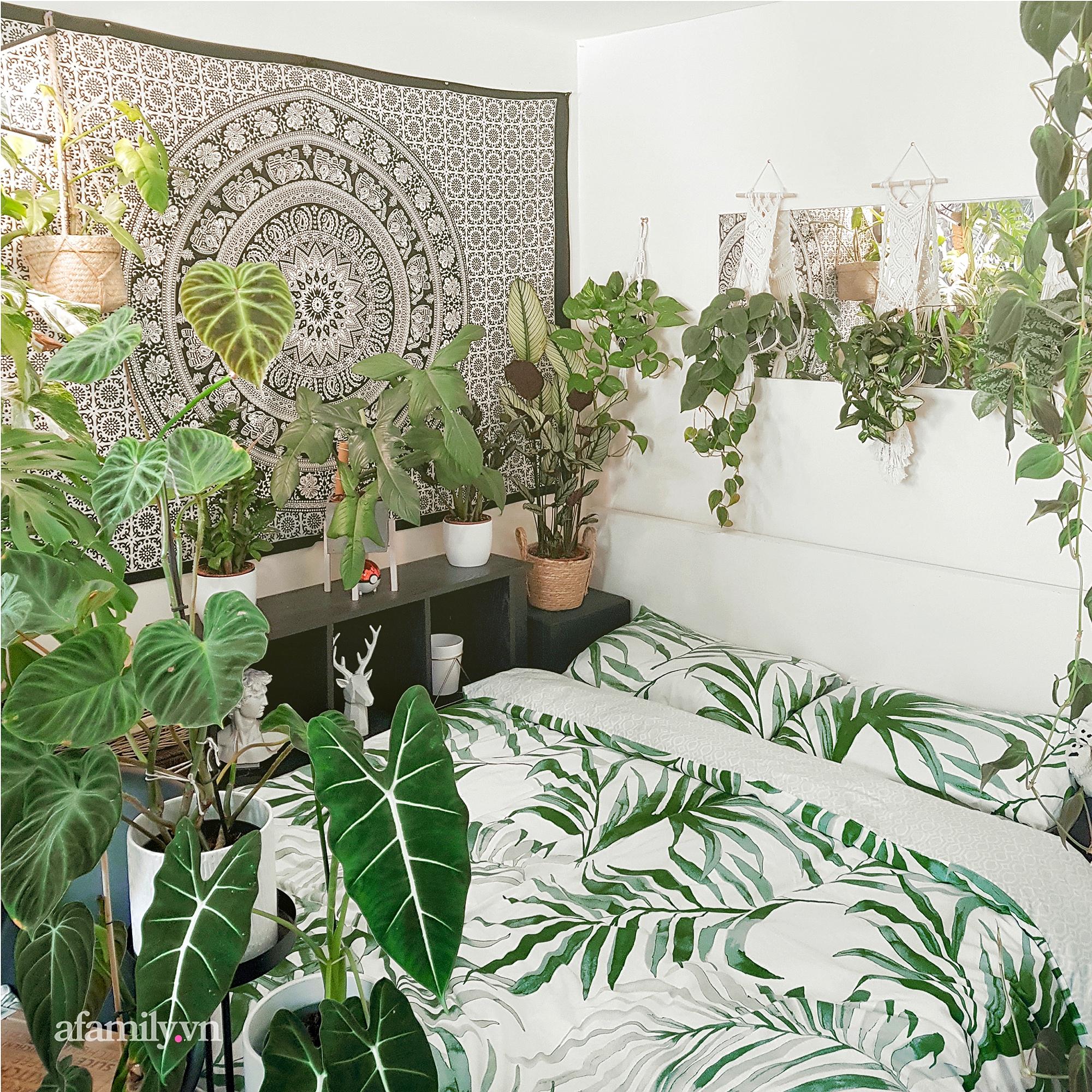 """BST hơn 200 cây kiểng lá của chàng kiến trúc sư người Việt tại Anh, gần như sống và nằm ngủ cùng cây mỗi ngày """"hoang mang về mức giá bạc tỷ được bán tại Việt Nam""""  - Ảnh 6."""