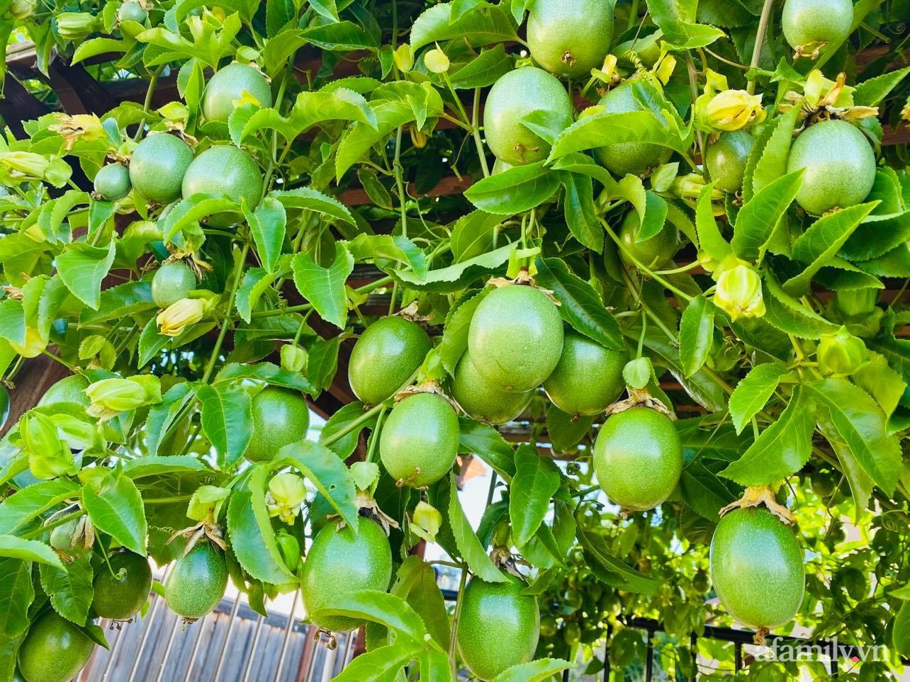 Khu vườn 800m² phủ kín đủ loại rau quả sạch của mẹ Việt đảm yêu cây - Ảnh 2.