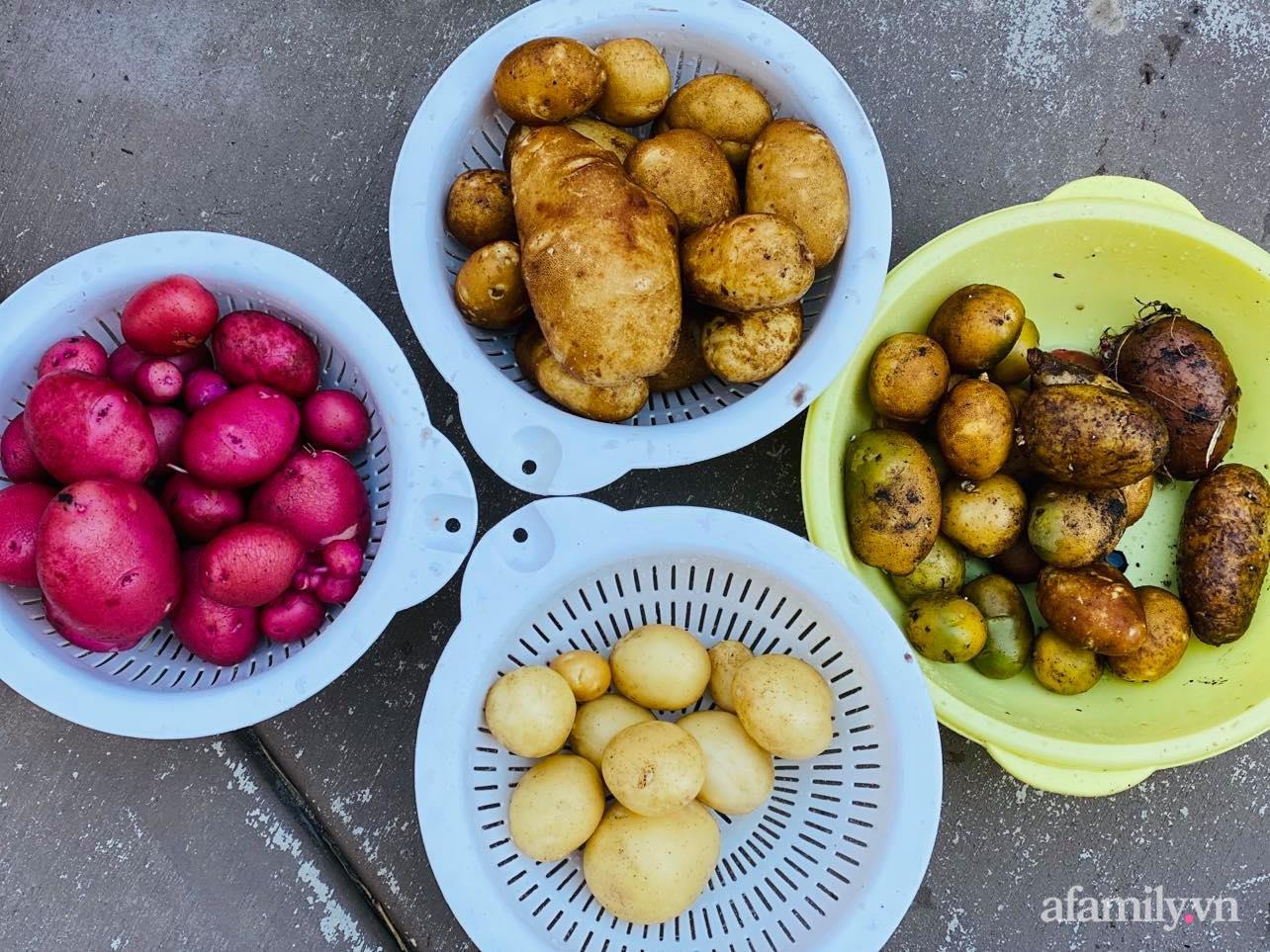 Khu vườn 800m² phủ kín đủ loại rau quả sạch của mẹ Việt đảm yêu cây - Ảnh 23.