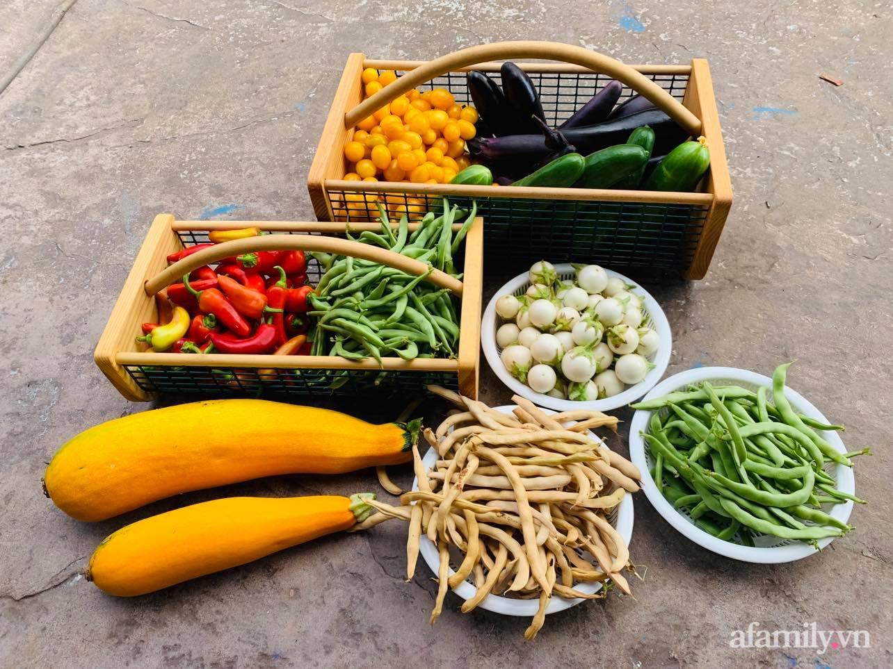 Khu vườn 800m² phủ kín đủ loại rau quả sạch của mẹ Việt đảm yêu cây - Ảnh 22.