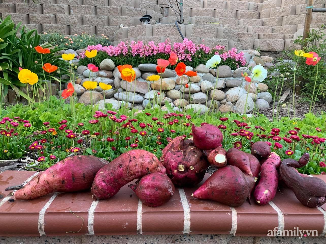 Khu vườn 800m² phủ kín đủ loại rau quả sạch của mẹ Việt đảm yêu cây - Ảnh 14.