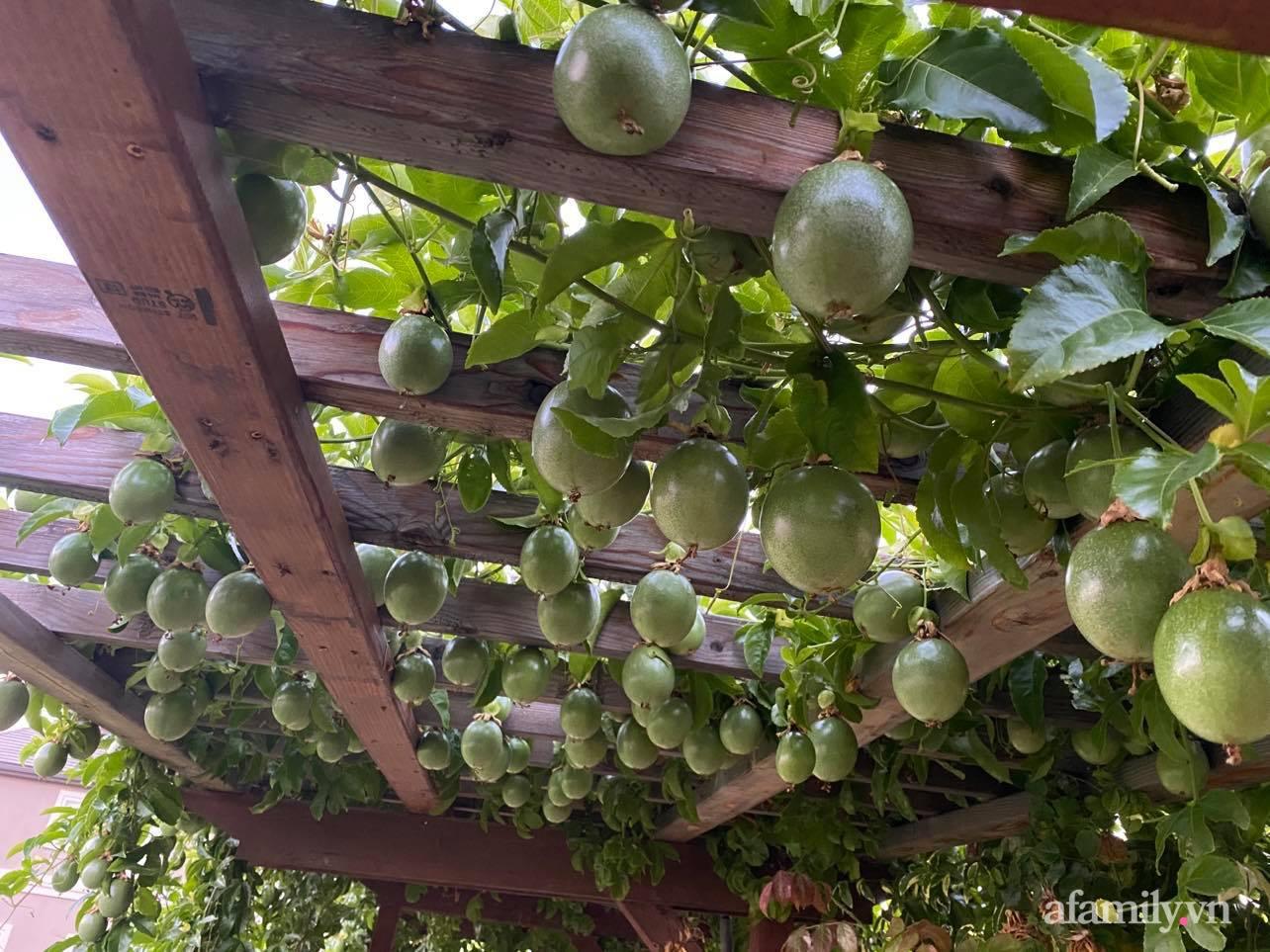 Khu vườn 800m² phủ kín đủ loại rau quả sạch của mẹ Việt đảm yêu cây - Ảnh 3.