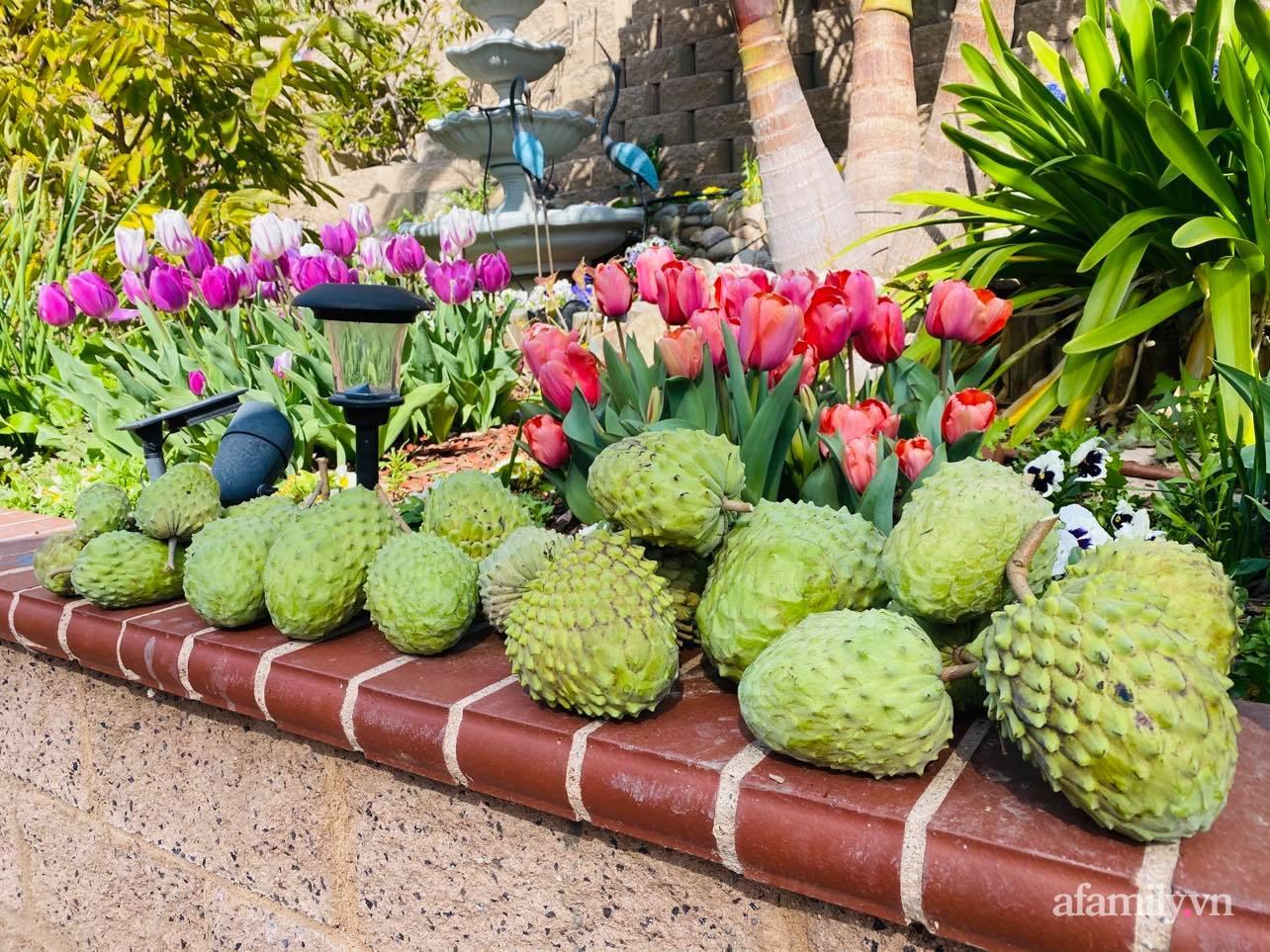 Khu vườn 800m² phủ kín đủ loại rau quả sạch của mẹ Việt đảm yêu cây - Ảnh 10.