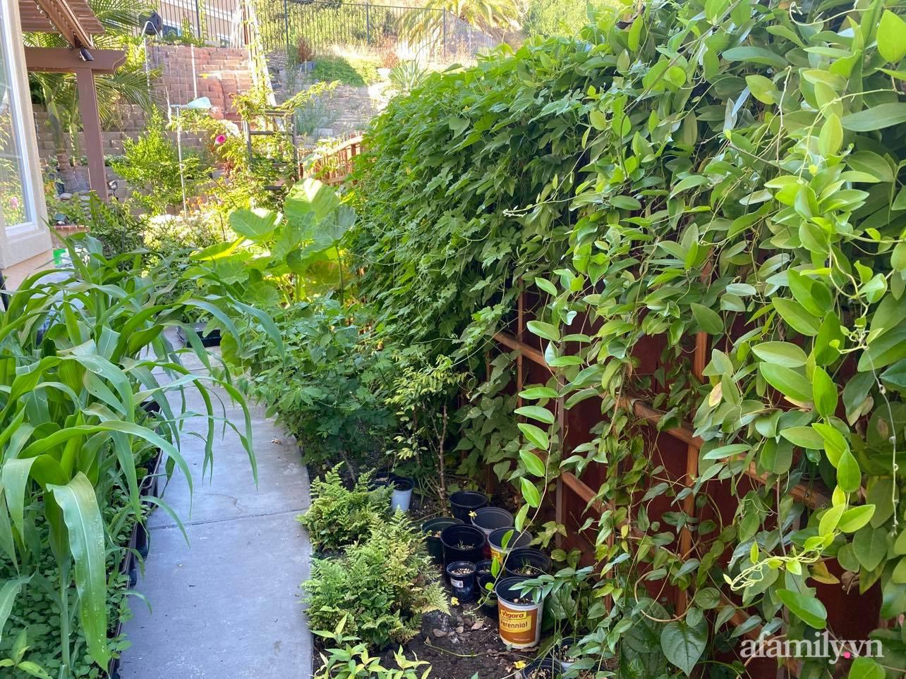 Khu vườn 800m² phủ kín đủ loại rau quả sạch của mẹ Việt đảm yêu cây - Ảnh 1.