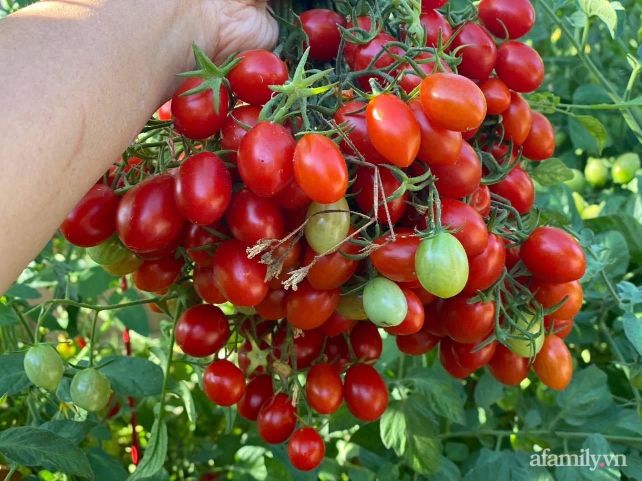 Khu vườn 800m² phủ kín đủ loại rau quả sạch của mẹ Việt đảm yêu cây - Ảnh 5.