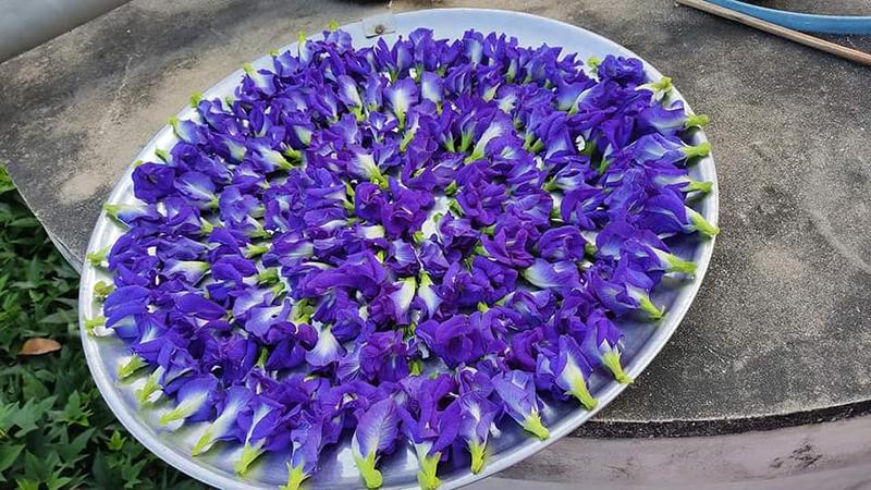 Thứ hoa rụng đầy bờ rào giờ được tiểu thương chợ mạng hét giá hơn nửa triệu đồng/kg - Ảnh 3.