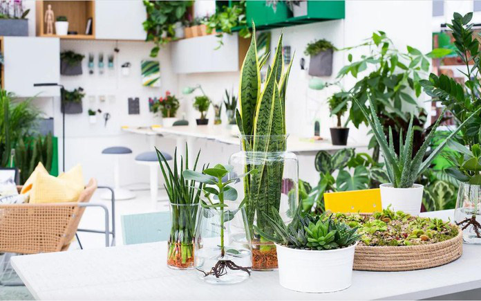 8 loại cây cảnh nên trồng trong nhà bếp vì có khả năng lọc không khí và khử mùi cực tốt