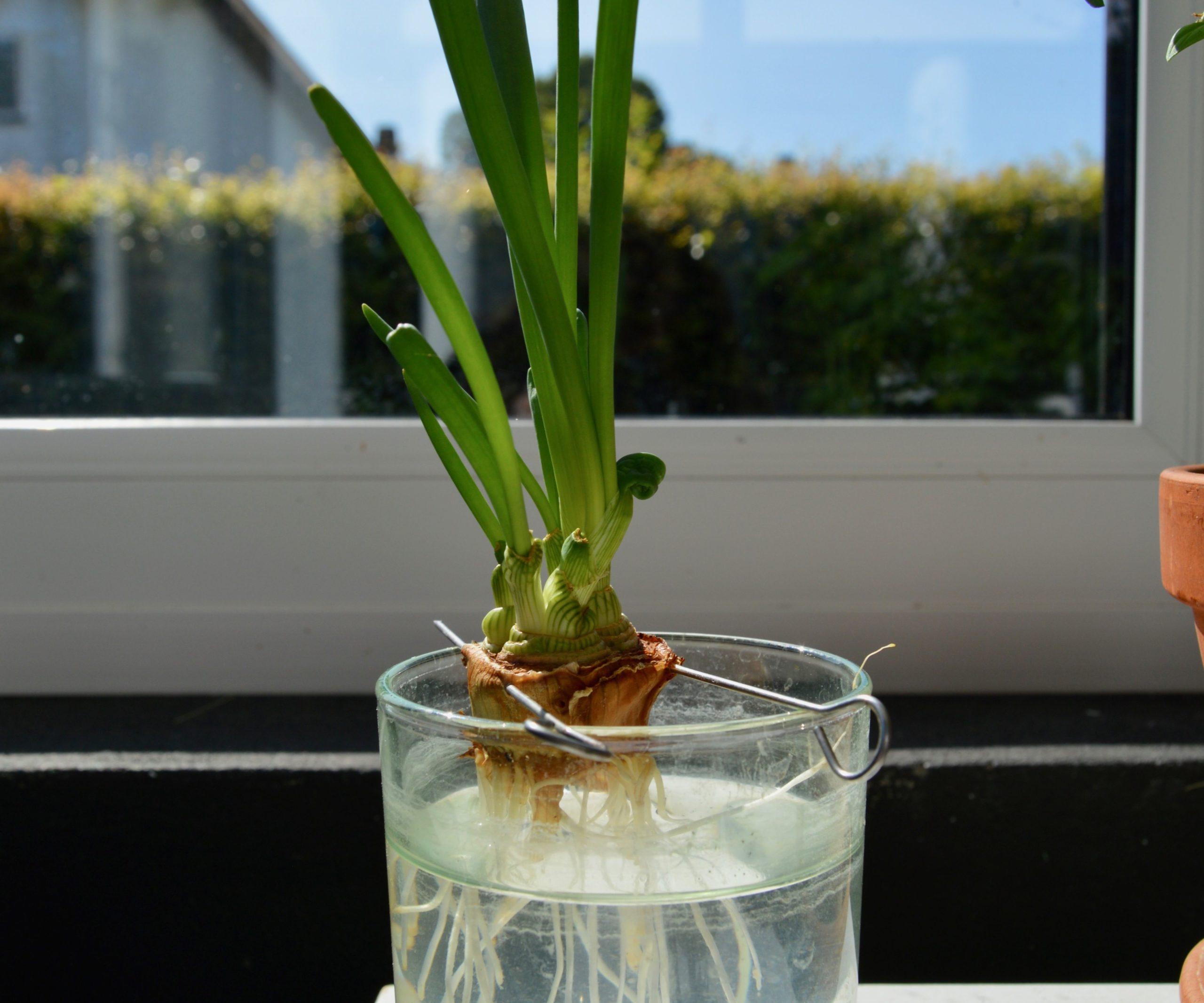 7 loại cây cảnh nên trồng trong nhà bếp vì lọc không khí và khử mùi cực tốt - Ảnh 3.