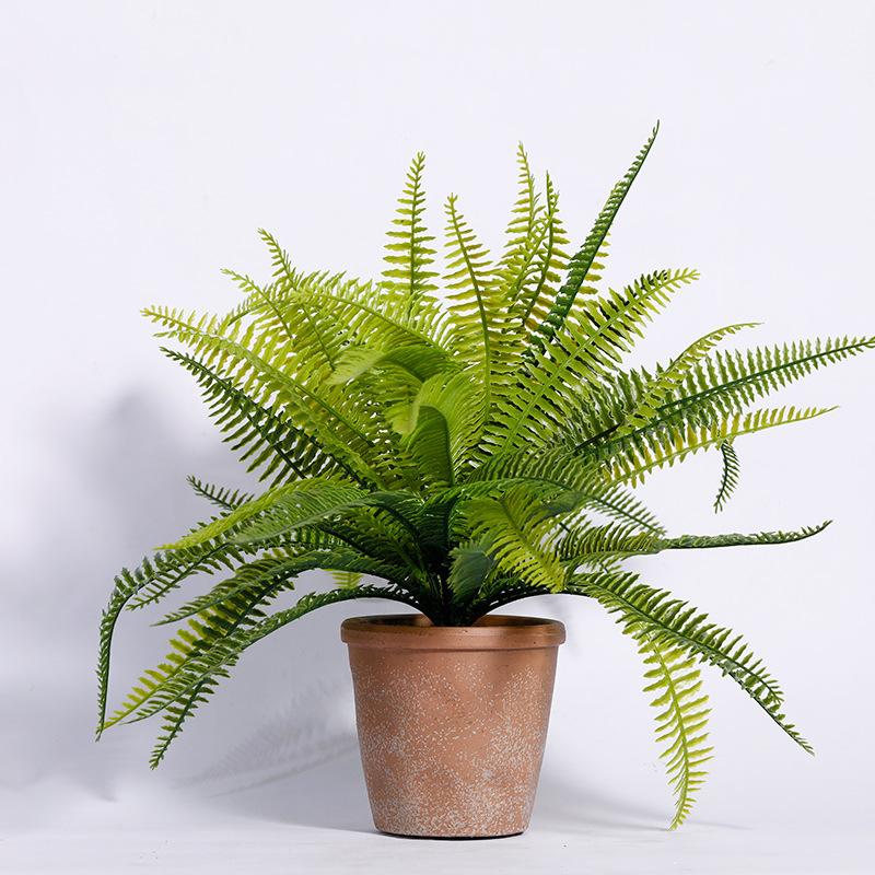 7 loại cây cảnh nên trồng trong nhà bếp vì lọc không khí và khử mùi cực tốt - Ảnh 7.