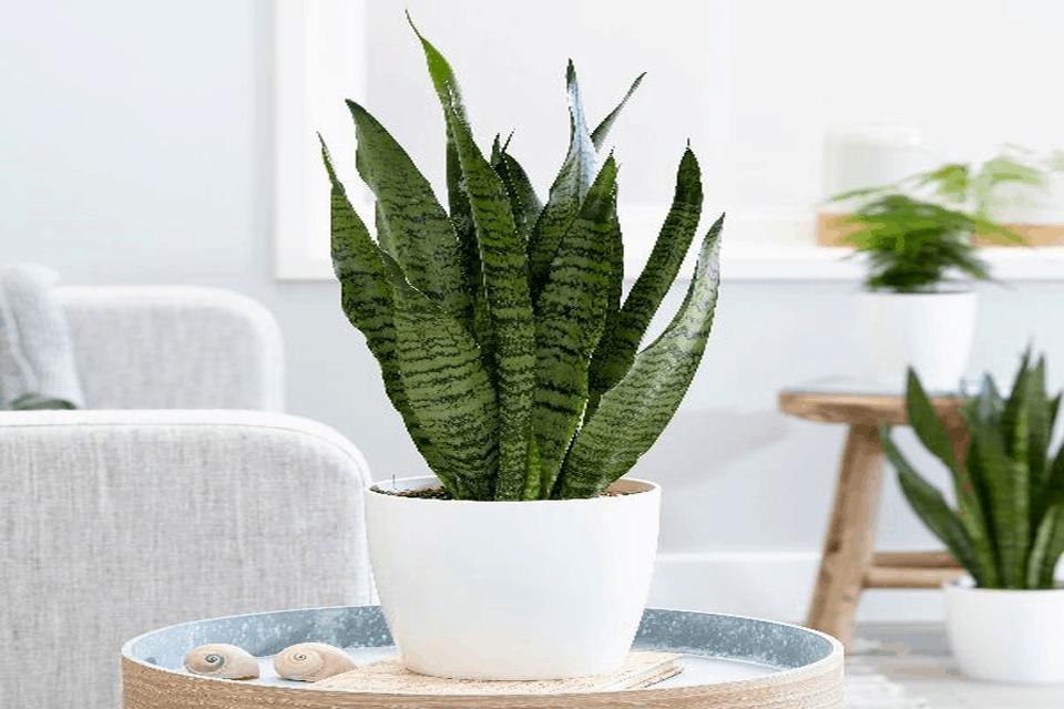 7 loại cây cảnh nên trồng trong nhà bếp vì lọc không khí và khử mùi cực tốt - Ảnh 9.