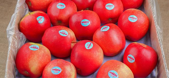Loạt trái cây vừa giải nhiệt mùa hè vừa tăng sức đề kháng thời dịch bệnh - Ảnh 2.