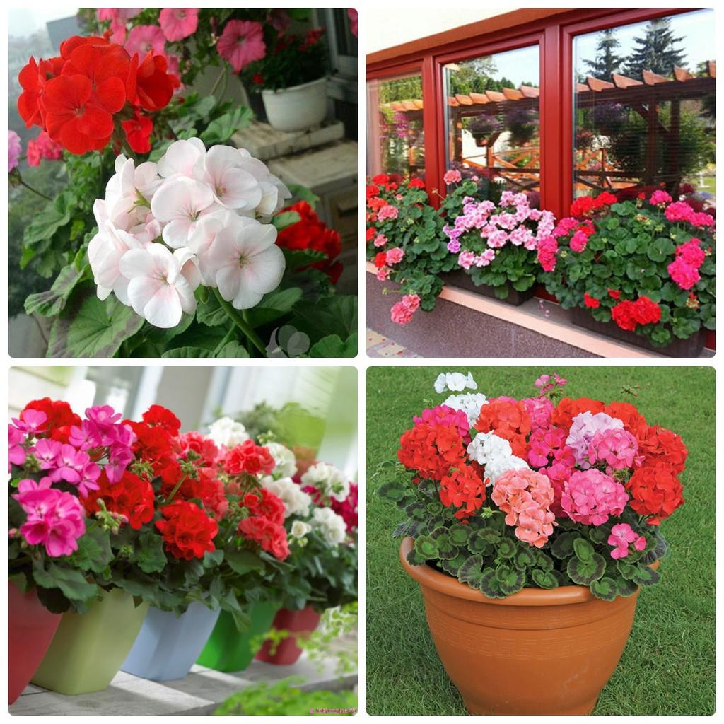 Mùa hè thì nên trồng hoa gì cho hợp lý? - Ảnh 2.