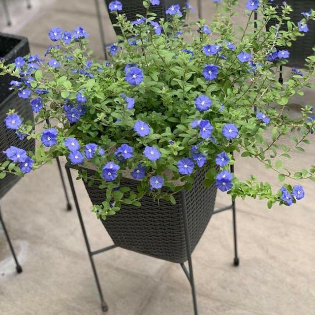 Mùa hè thì nên trồng hoa gì cho hợp lý? - Ảnh 10.