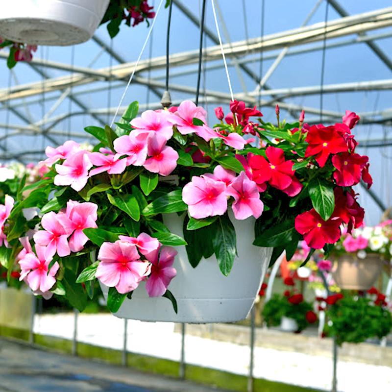 Mùa hè thì nên trồng hoa gì cho hợp lý? - Ảnh 7.