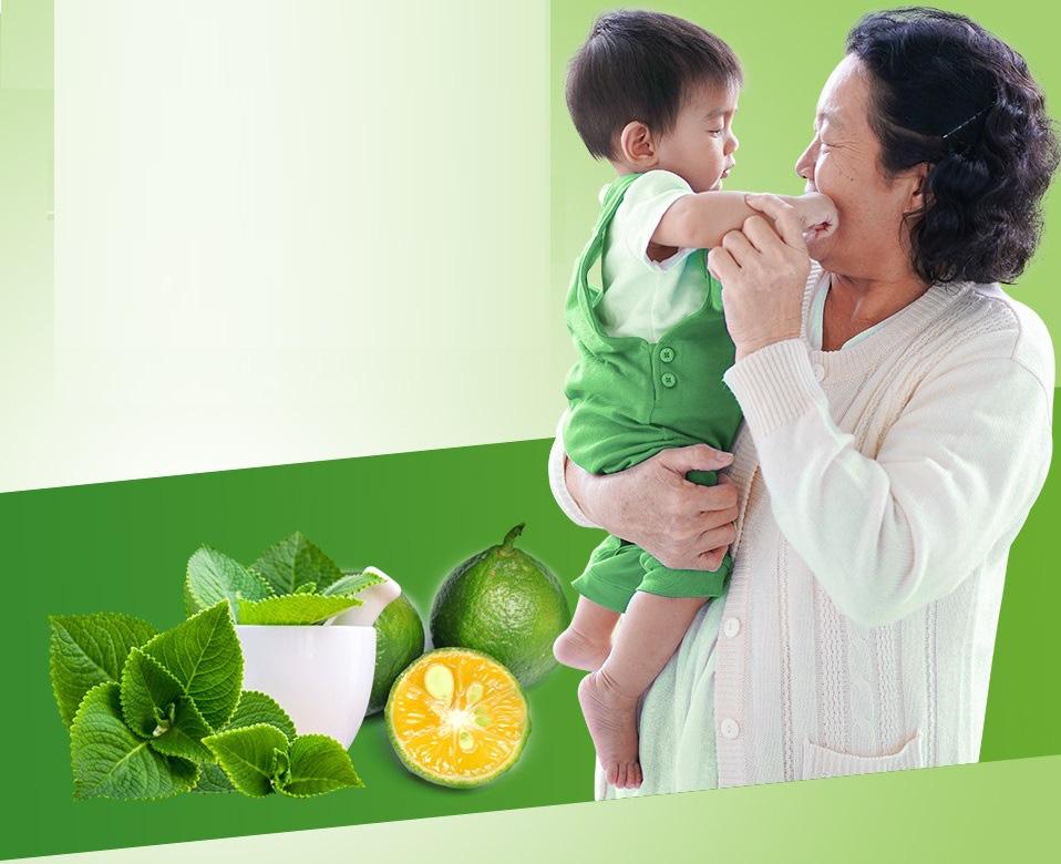 Húng chanh và trái quất - Thảo dược hay giảm ho cho bé - Ảnh 1.