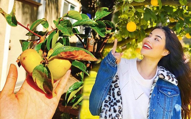 Ngắm khu vườn cây nào cũng trĩu quả và hoa rực rỡ trong biệt thự triệu đô ở Mỹ của Phạm Hương