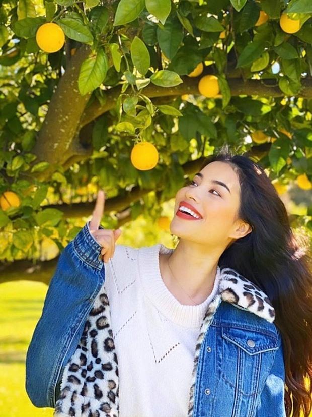 Ngắm khu vườn sai trĩu cây ăn trái và hoa rực rỡ trong biệt thự triệu đô ở Mỹ của Phạm Hương - Ảnh 2.
