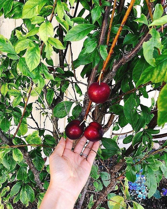 Ngắm khu vườn sai trĩu cây ăn trái và hoa rực rỡ trong biệt thự triệu đô ở Mỹ của Phạm Hương - Ảnh 10.