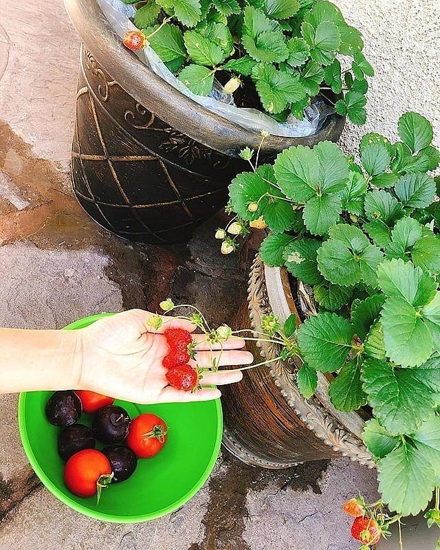 Ngắm khu vườn sai trĩu cây ăn trái và hoa rực rỡ trong biệt thự triệu đô ở Mỹ của Phạm Hương - Ảnh 7.