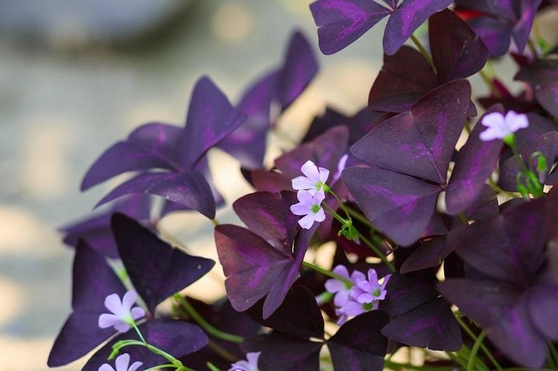 Mùa hè thì nên trồng hoa gì cho hợp lý? - Ảnh 8.