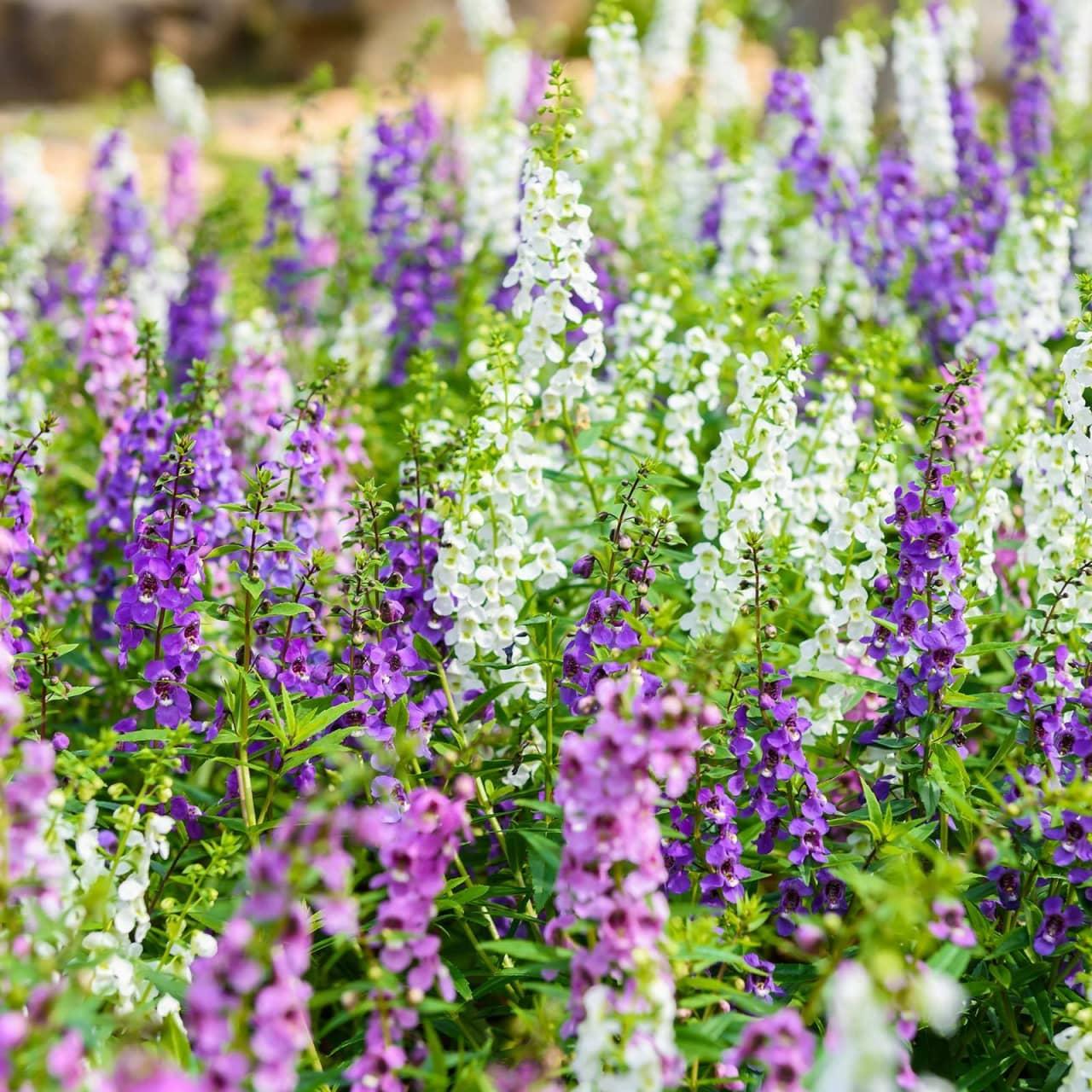 Mùa hè thì nên trồng hoa gì cho hợp lý? - Ảnh 5.