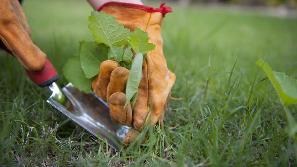 Những cách sử dụng giấm cực thú vị ít người biết để chăm sóc khu vườn thêm tươi tốt - Ảnh 1.