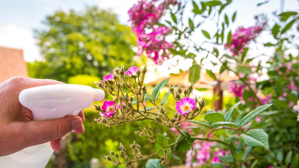 Những cách sử dụng giấm cực thú vị ít người biết để chăm sóc khu vườn thêm tươi tốt - Ảnh 6.