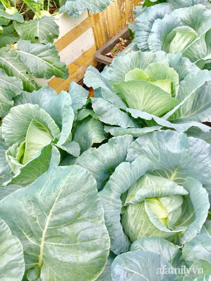 Sân thượng 40m² xanh mát quanh năm với đủ loại rau quả sạch của người phụ nữ về hưu ở Vũng Tàu - Ảnh 13.