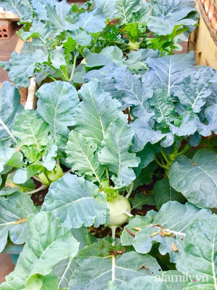 Sân thượng 40m² xanh mát quanh năm với đủ loại rau quả sạch của người phụ nữ về hưu ở Vũng Tàu - Ảnh 8.