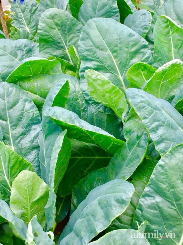 Sân thượng 40m² xanh mát quanh năm với đủ loại rau quả sạch của người phụ nữ về hưu ở Vũng Tàu - Ảnh 10.