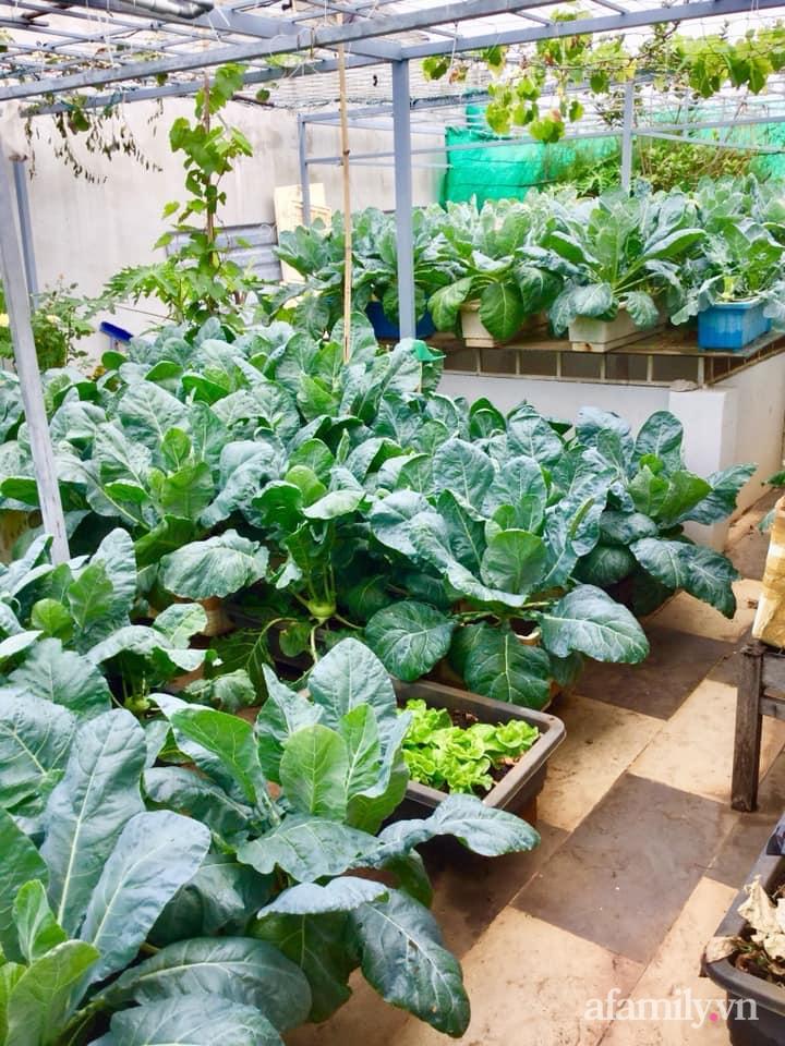 Sân thượng 40m² xanh mát quanh năm với đủ loại rau quả sạch của người phụ nữ về hưu ở Vũng Tàu - Ảnh 4.