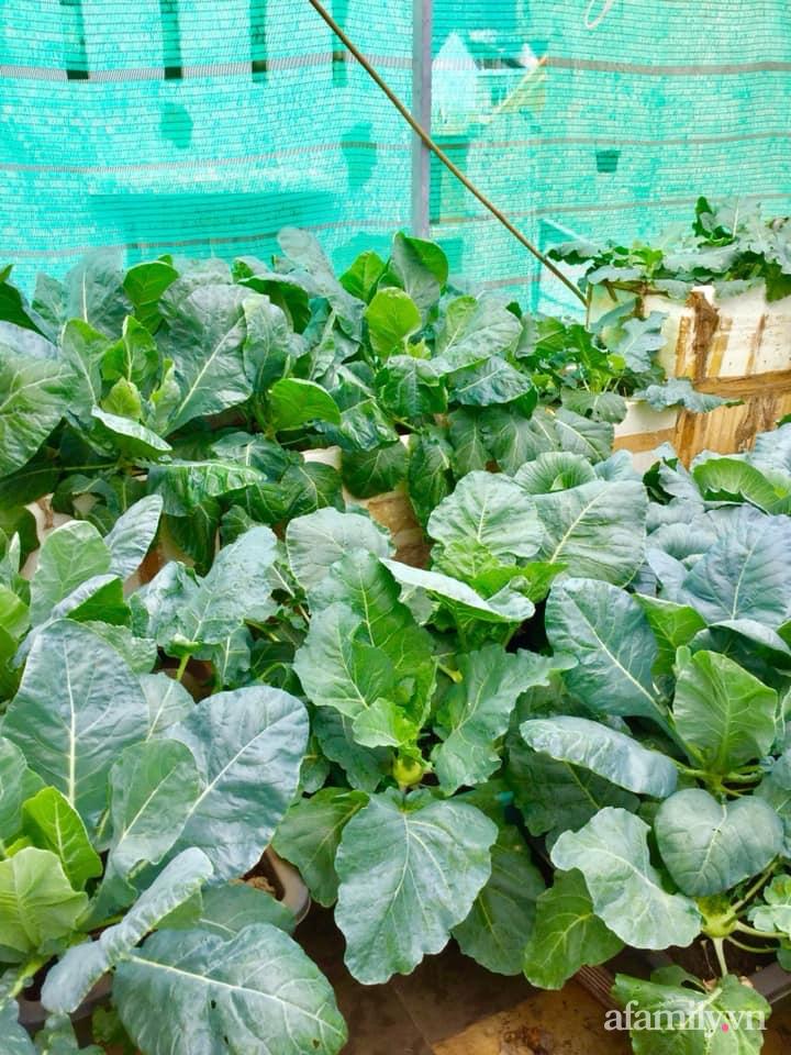 Sân thượng 40m² xanh mát quanh năm với đủ loại rau quả sạch của người phụ nữ về hưu ở Vũng Tàu - Ảnh 7.