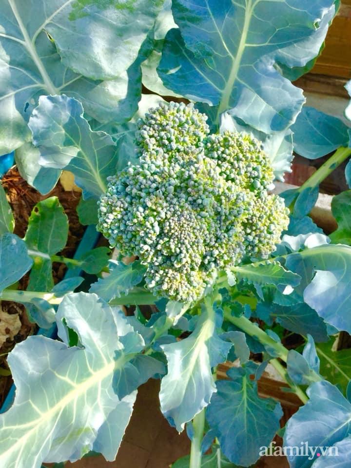 Sân thượng 40m² xanh mát quanh năm với đủ loại rau quả sạch của người phụ nữ về hưu ở Vũng Tàu - Ảnh 11.