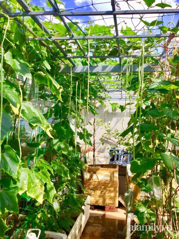 Sân thượng 40m² xanh mát quanh năm với đủ loại rau quả sạch của người phụ nữ về hưu ở Vũng Tàu - Ảnh 5.