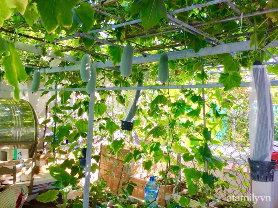 Sân thượng 40m² xanh mát quanh năm với đủ loại rau quả sạch của người phụ nữ về hưu ở Vũng Tàu - Ảnh 2.