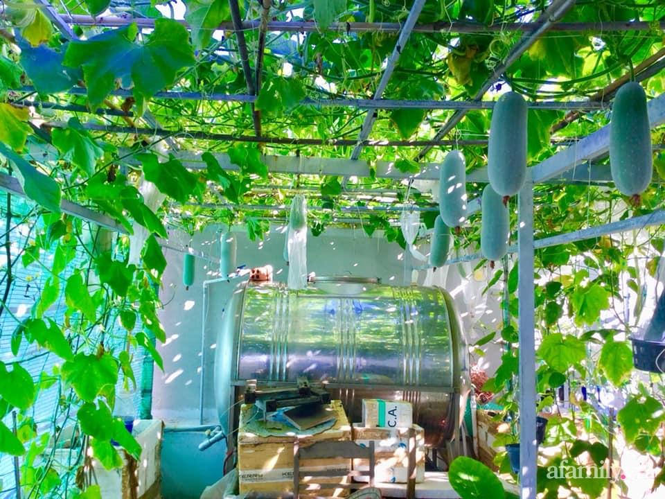 Sân thượng 40m² xanh mát quanh năm với đủ loại rau quả sạch của người phụ nữ về hưu ở Vũng Tàu - Ảnh 1.