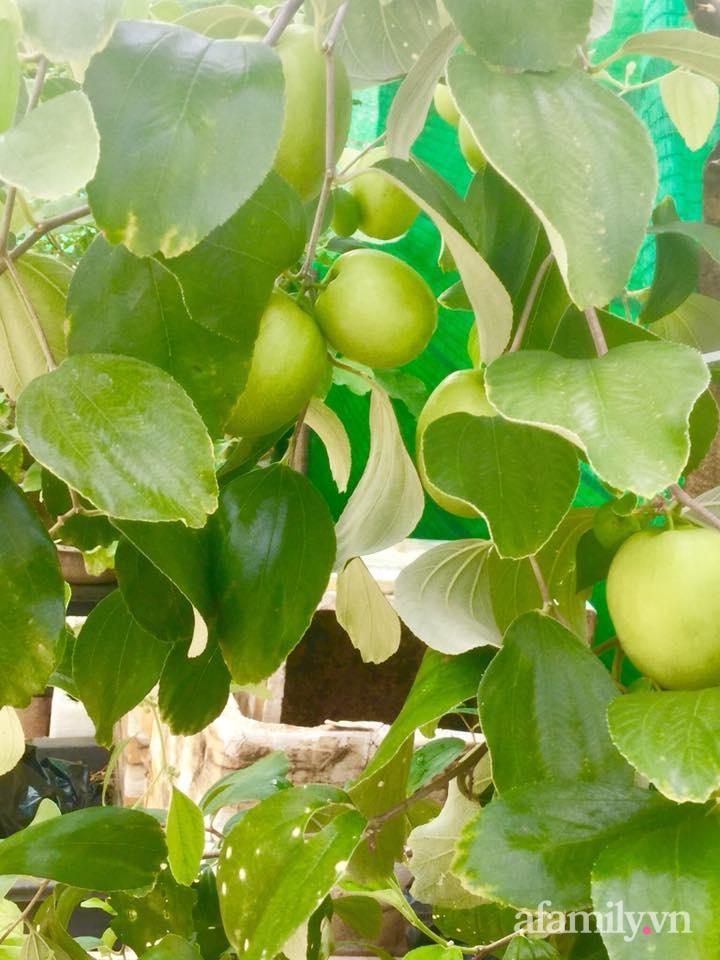 Sân thượng 40m² xanh mát quanh năm với đủ loại rau quả sạch của người phụ nữ về hưu ở Vũng Tàu - Ảnh 14.